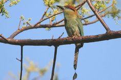 Sierra Madre Highland Birds and El Tuito | ecotoursvallarta.com