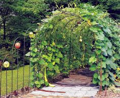 Gourd Garden Walk and Arbor.  Wish I had room for this.