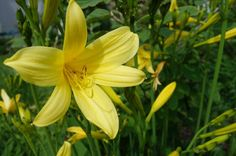 Fotos von Pflanzen - Pflanzenfotos aus dem heimischen Garten     https://kleinesonne.de/fotos-pflanzen/  #garten #garden #gardening #plants #flowers #pflanzen #gärten #gartenarbeit #pflanzen #blumen