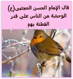 الامام الحسن المجتبى عليه السلام