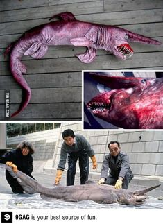 Deep sea goblin shark, otherwise known as a nopefish.