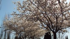 Spring in Seattle , Washington