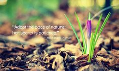 Flowering Wisdom   Gardening Quotes   Eagleson Landscape Co.