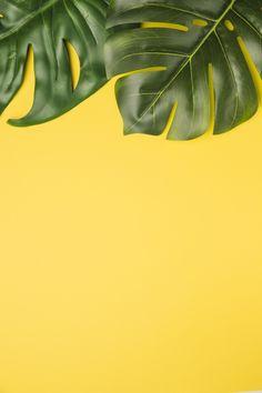 Green leaves on orange background Free Photo Plant Wallpaper, Flower Background Wallpaper, Flower Phone Wallpaper, Leaf Background, Orange Background, Pattern Background, Twitter Backgrounds, Summer Backgrounds, Flower Backgrounds