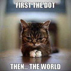 They sure do love that red dot!  So cruel.  So cute!