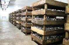 Mushroom Farming Mushroom Madness Part 1 – EDB13