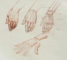 Ramon Hurtado's Head, Hands and Costume Drawing Human Anatomy Drawing, Body Drawing, Life Drawing, Hand Anatomy, Anatomy Art, Hand Drawing Reference, Art Reference Poses, Anatomy Reference, Anatomy Sketches