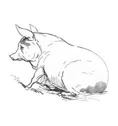 Pig illustration, c. 1850
