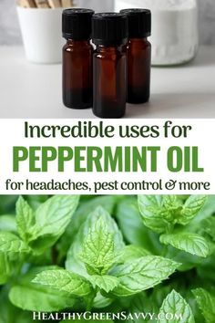 Peppermint essential oil has so many benefits and uses! This delicious-smelling essential oil can relieve headaches and sore muscles and is a wonderful energizer. Peppermint oil uses include relieving pain and respiratory problems and repelling pests. Find out the many, many excellent uses for peppermint oil. #peppermintoil #essentialoiluses #peppermintessentialoil #remedies #nontoxicpestcontrol Peppermint Oil For Headaches, Peppermint Essential Oil Benefits, Peppermint Oil Uses, Essential Oil Uses, Green Living Tips, How To Relieve Headaches, Sore Muscles, Green Cleaning, Natural Products