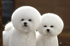 who's the groomer?! #dogs #doggies #doggrooming #crazy #stuff
