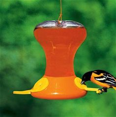 Songbird Essentials offers products that bring birds to the backyard and help bring families and nature together Oriole Bird Feeders, Nectar Recipe, Screech Owl, Lowes Home Improvements, Yard Art, Art For Sale, Squirrel, Sale Sale, Birdhouses