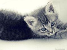 Cute cat Desktop Wallpaper Download 8
