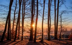 Forest, Landscape, Sun, Trees, Nature, Wood, Winter