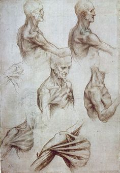 Movements of the shoulder - Leonardo da Vinci