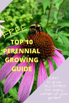 Wondering which perennials to add to your garden this spring?  The choices are endless…where to begin? I'd love to help narrow down your search to some extremely hardy and beautiful favourites I planted 20 years ago which are STILL thriving in my garden today. There is a plant suitable for every corner of your garden...