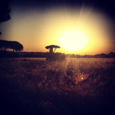 """@ilaria_agostini's photo: """"Sunset in the roma countryside"""""""