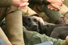 General shot 'Gundog' (Copyright Nick Ridley photography