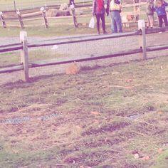 【minimalliy】さんのInstagramをピンしています。 《Bunny hop hop carrots everywhere food for a long time! Zootopia who has watched!! Loved that movie! ! ! ! ! ! ! ! ! #minimalism #minimal #minimalismo #minimalist #beautiful #minimalexperience #bunnies #farm #nature_perfection #skylovers #木 #ig_minimalshots #ig_minimalismo #ig_minimalist #ic_minimal #instagram #minimalista #rabbit #unlimitedminimal #さくら #桜 #beautifulday #minimalliy #空#ソラ#そら#skies #horizon #instagramjapan》