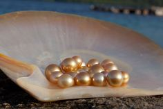 Golden South Sea pearls grown at Jewelmer's Pearl Farm near Flower Island | Flower Island is owned by Jacques Branellec, founder of Jewelmer, a French Filipino company that specializes in the production of deep golden South Sea pearls.