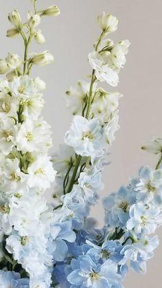 Light Blue Flowers, Turquoise Flowers, Flower Lights, Hydrangea Boutonniere, Blue Boutonniere, Hydrangea Flower, Flower Petals, Wholesale Flowers Online, Giant Flowers