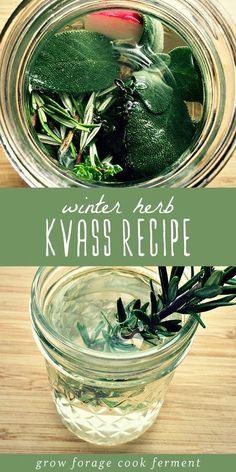 Winter is the perfect time to make this herb kvass! It's a bubbly, fermented drink that is traditionally made with beets, but can be made with any vegetable that ferments well. This recipe calls for a few handfuls of winter herbs and a radish. This ferme Kombucha, Kefir, Probiotic Drinks, Fermentation Recipes, Winter Drinks, Wild Edibles, Fermented Foods, Kraut, Home Brewing