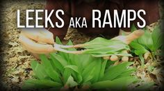 Leeks aka Ramps - Wild Edibles Series