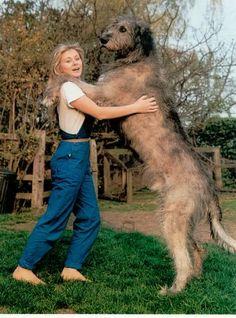 Irish Wolfhound. I want one!!!!