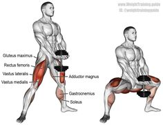 Dumbbell sumo squat (aka dumbbell plié squat). A compound lower-body exercise. Target muscle: Gluteus Maximus. Synergistic muscles: Quadriceps (Rectus Femoris, Vastus Lateralis, Vastus Medialis, Vastus Intermedius), Adductor Magnus, and Soleus. Dynamic stabilizers: Hamstrings and Gastrocnemius.