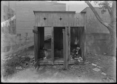 Three Outhouses (dirty) and laundry and tree (1904).