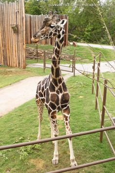 If you haven't had a chance to visit the Tulsa Zoo – it's definitely a must!