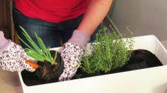 Faça você mesmo: como fazer uma horta em casa