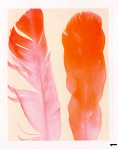 lovely watercolor feather