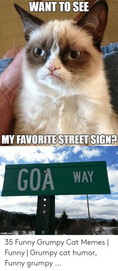 Top 23 Grumpy Cat Memes Work - Grumpy Cat - Ideas of Grumpy Cat - Do you love Grumpy cat. If you do These Grumpy cat Memes work for you.These Grumpy cat Memes work are so funny and humor. The post Top 23 Grumpy Cat Memes Work appeared first on Cat Gig. Grumpy Cat Quotes, Grumpy Cats, Grumpy Cat Memes Clean, Cute Cat Memes, Grumpy Cat Humor, Clean Memes, Animal Jokes, Funny Animal Memes, Funny Animal Pictures