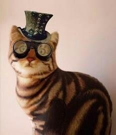 Steam Punk Kitteh