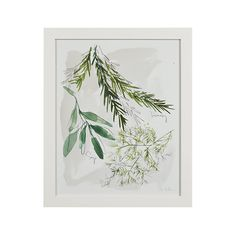 Set of 2 Culinary Herbs Prints | Crate and Barrel