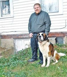A Saint Bernard rescued from an Ohio animal shelter turned into a crime-fighting hero less than six hours after he arrived at his new home.    The 114-pound Hercules—still recovering from injuries he received in a coyote attack—stopped a burglar trying to break into the home of his rescuers, Lee and Elizabeth Littler of Hillsboro, Ohio.