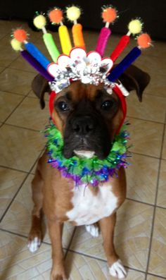 Birthday boxer! @Heather Hogsed... do you think Mo would let you do this to her???