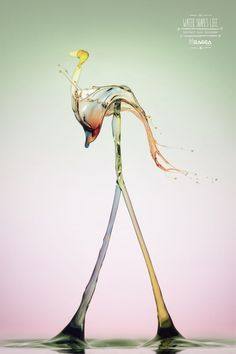 Ragga Magazine: Flamingo — Water shapes life. Protect our sources.