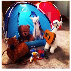 Barry & White, the Acuff family llamas, went on a camping trip to cheer up their friend Foxy Brown who somehow got turned into a purse.