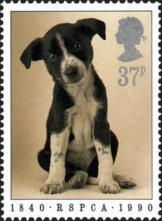 Puppy (Canis lupus familiaris) , Anniversary of Royal Society for the Prevention of Cruelty to Animals: R. United Kingdom of Great Britain & Northern Ireland) 1990 Uk Stamps, Stamp World, Royal Mail Postage, Postage Stamp Art, Fabric Stamping, Vintage Stamps, Rare Coins, Penny Black, Fauna
