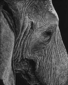 John Agnew (scratchboard drawing)