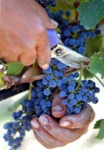 Hablemos de vino: Cómo catar un vino - Parte II