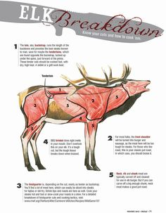 This guide shows where to find the five best elk meat cuts and how to cook each one. Elk meat is God's gift to carnivores. It's delicious, it's lean, and it's super healthy. In fact, elk meat has more protein and less fat than any other North American game animal. As you gear up for ...