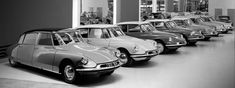 Lovely Citroën DS and ID models, all lined up.