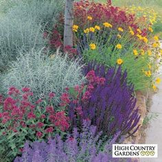 A High Country Gardens Exclusive, our drought resistant jumbo Waterwise pre-planned garden will allow you to grow more flowers while using less water with this arresting combination of long-blooming, easy-care perennials. Their bright, clear colors are a delight to your eye, but their inedible foliage will keep the rabbits and deer at bay. Perfect for that hot, sunny spot in your yard.
