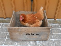 Making a Dust Bath For Your Chickens - Backyard Poultry Magazine