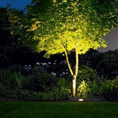 How To Choose Outdoor Lighting: Exterior & Landscape Lighting 101 In-ground lights are used to illuminate specific landscape. The post How To Choose Outdoor Lighting: Exterior & Landscape Lighting 101 appeared first on Garden Ideas. Backyard Trees, Garden Trees, Wooded Backyard Landscape, House Landscape, Outdoor Garden Lighting, Outdoor Gardens, Lighting For Gardens, Lights In Garden, Lights In Trees