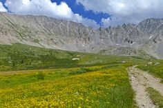 Mayflower Gulch brimming with yellow wildflowers. Rocky Mountains, Colorado. Calm Cradle Photo & Design