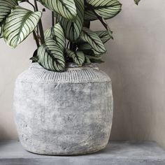 How amazing is this planter from the Danish House Doctor ? The House Doctor Rustik planter is made of fiber clay with concrete finish. The planter has a beautiful pattern which creates a unique look. Danish House, Concrete Finishes, Concrete Planters, House Doctor, Beautiful Patterns, Vase, Bedroom, Create, Unique