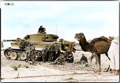 Tiger 1 Tunisia.
